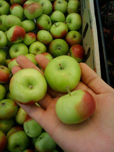 Cute miniature apples - Foodwanderer - Foodwanderer